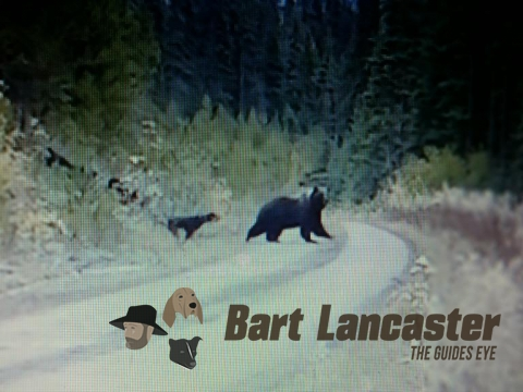 Grizzly Bears   Bart Lancaster   Guides Eye   International